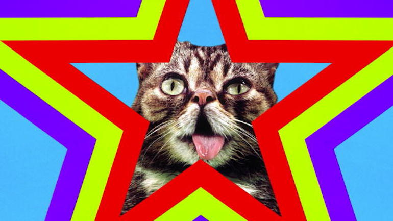 139155139553514383100201197_LilBub_Party_Animals_Music_Video